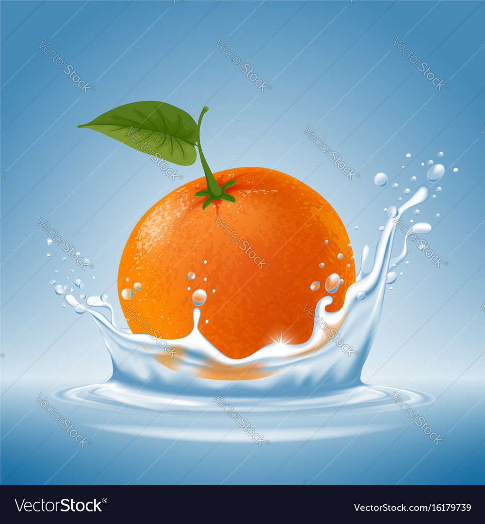 Mandarin in water splash vector image
