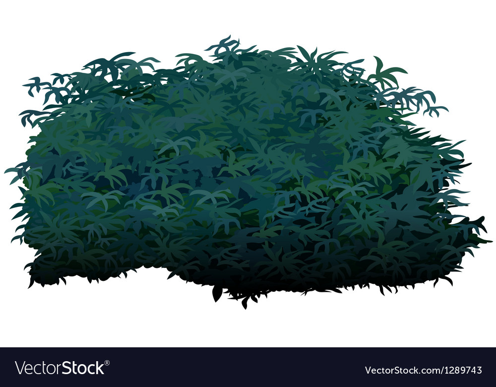 Shrub vector image