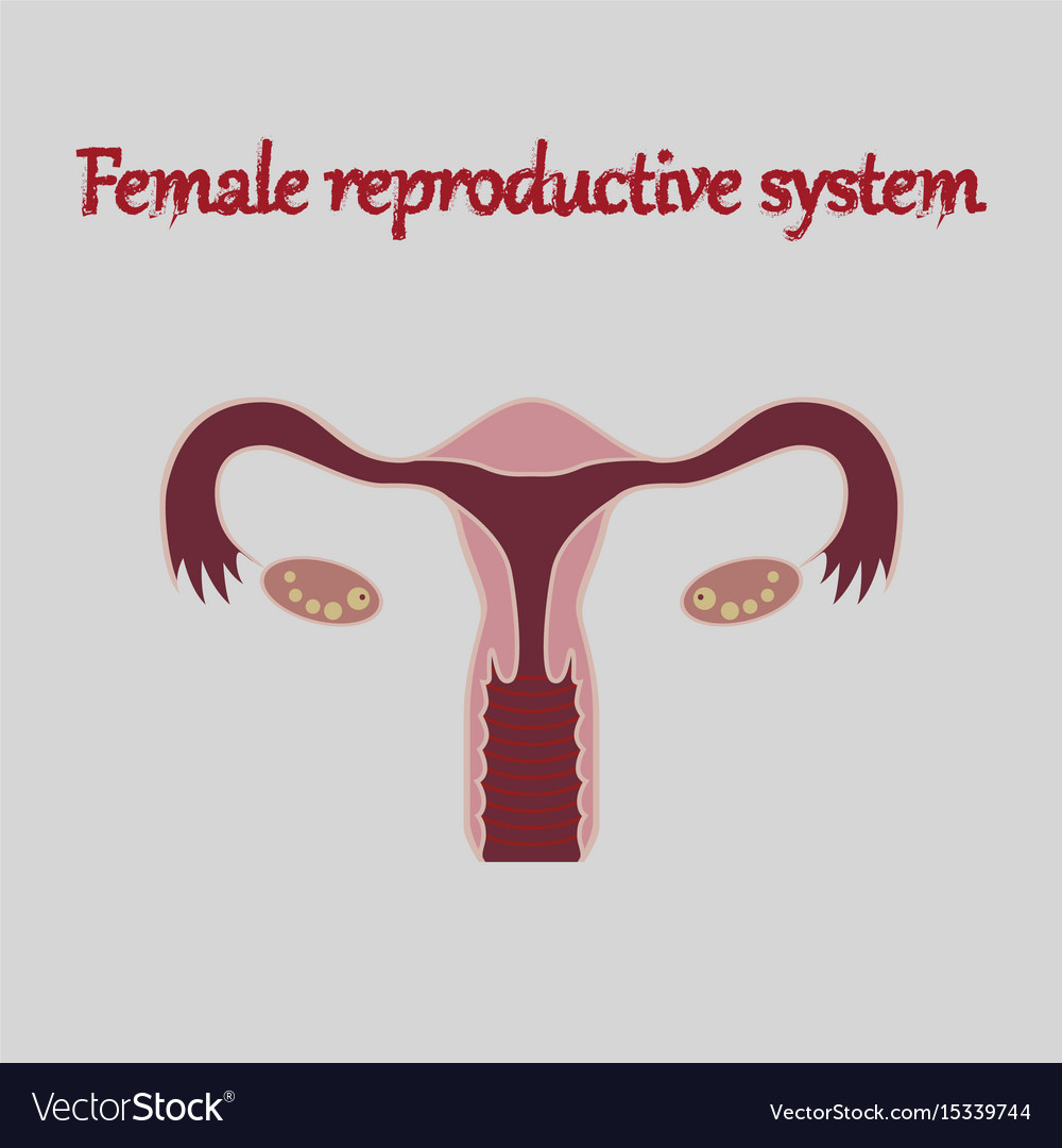 Human organ icon in flat style female reproductive vector image