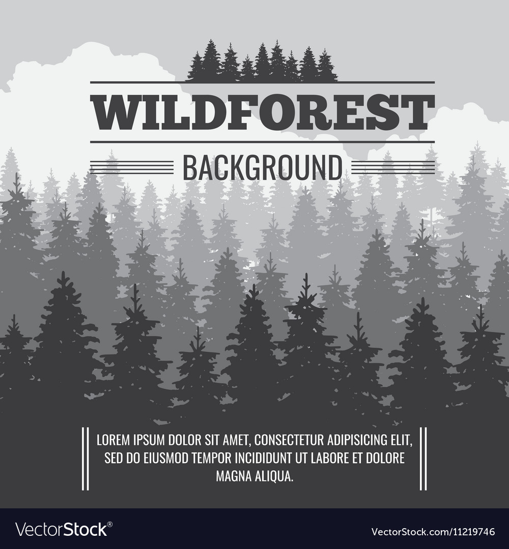 Wild coniferous pine forest outdoor nature vector image