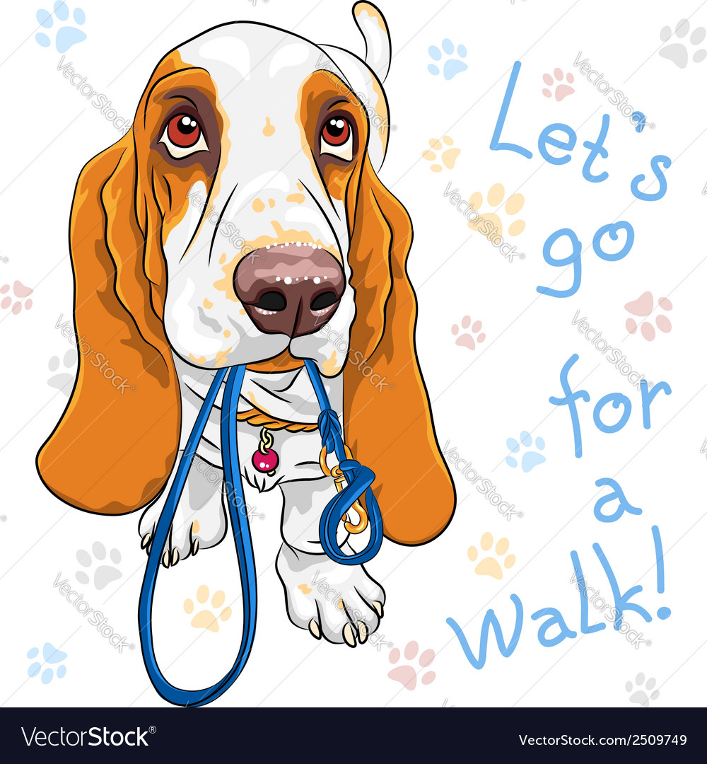 Dog Basset Hound breed wants to walk vector image