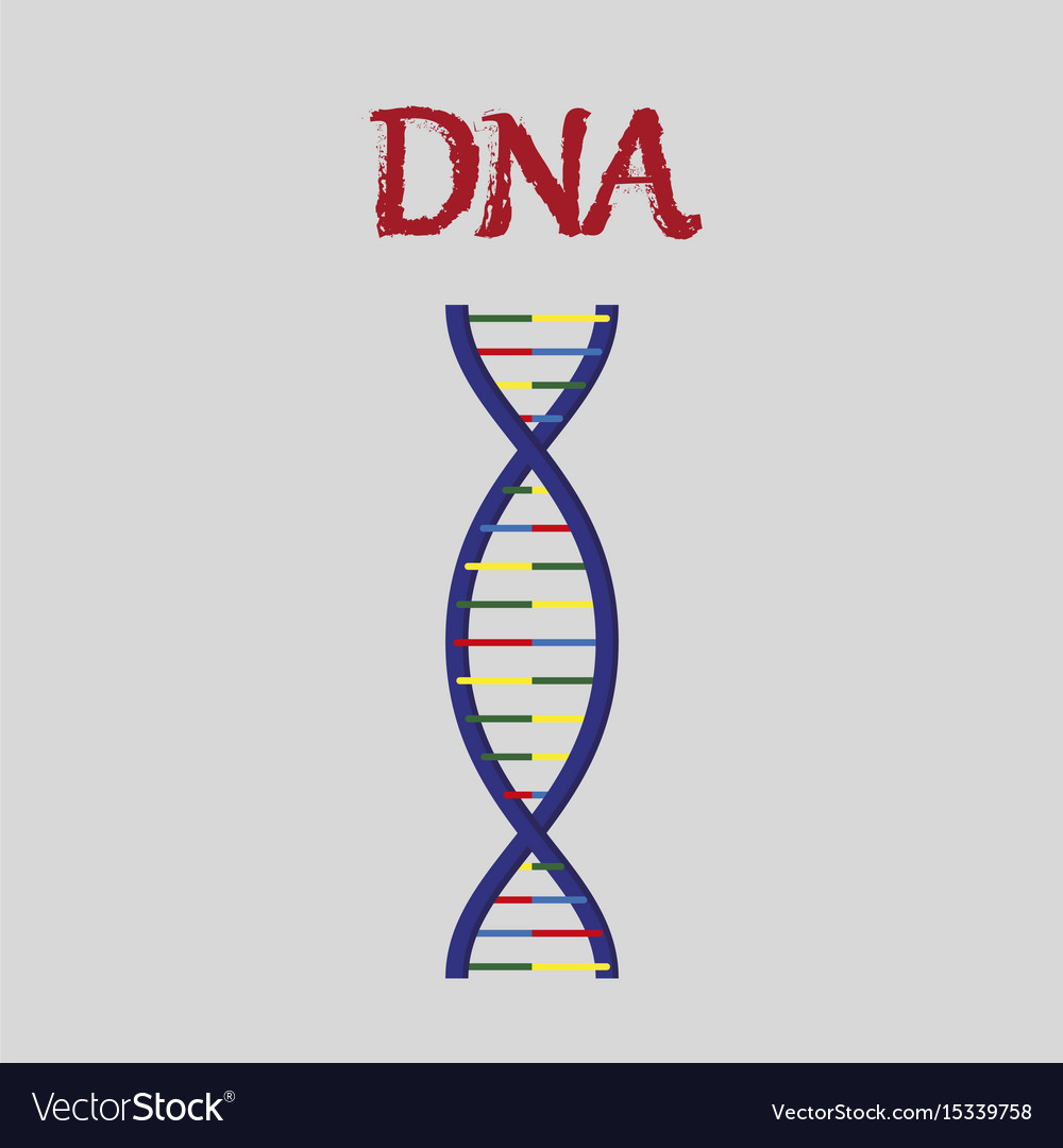Human organ icon in flat style dna vector image
