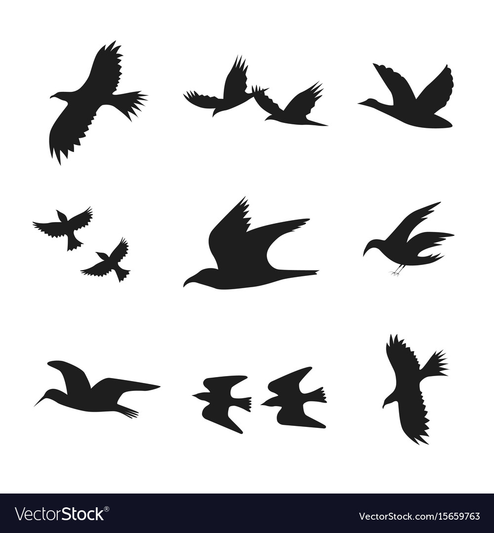 Silhouette Black Fly Flock Of Birds Vector 15659763