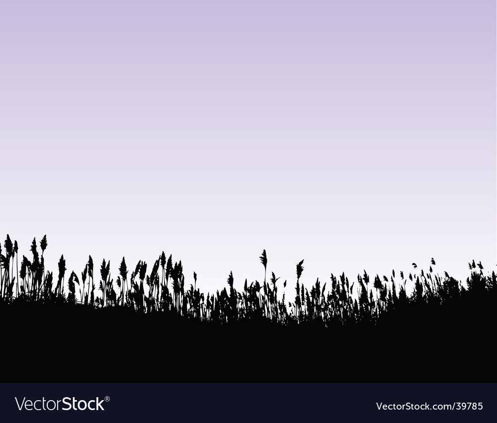 Field of wheat grass vector image