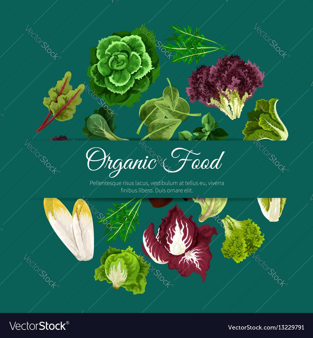 Leafy salads vegetables poster vector image