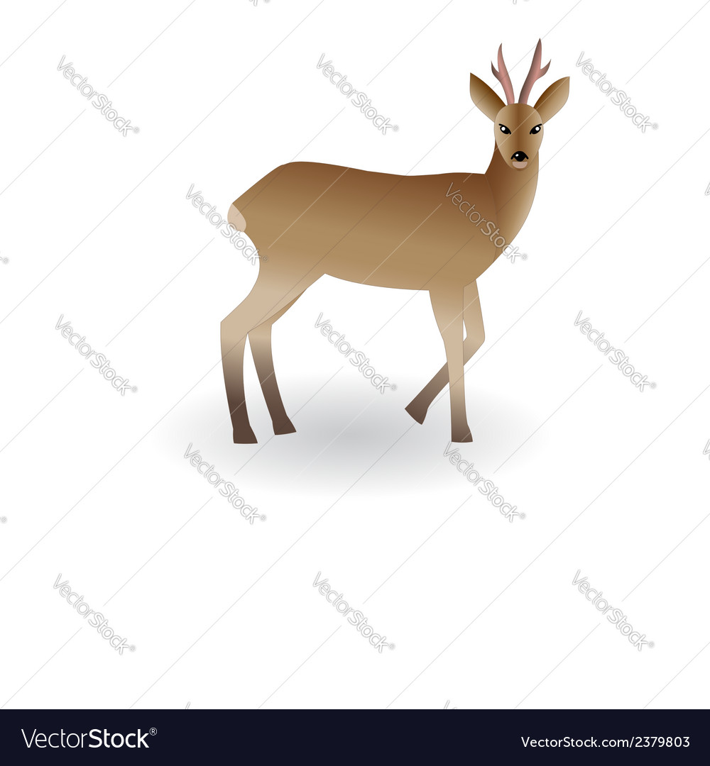 Wild animal roe vector image
