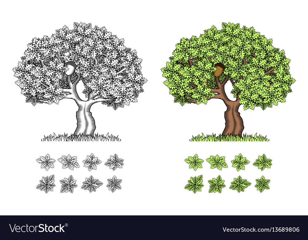 Stylized wood for engraving oak vector image