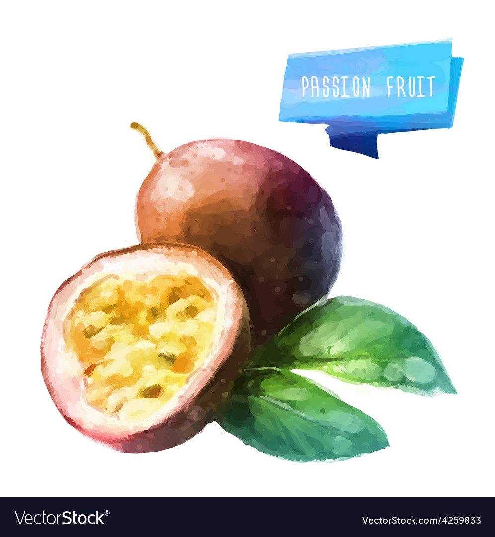 Passion fruit hand drawn watercolor on a white vector image