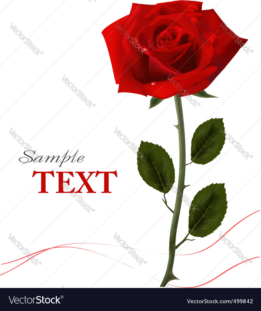 Background with beauty red rose vector image