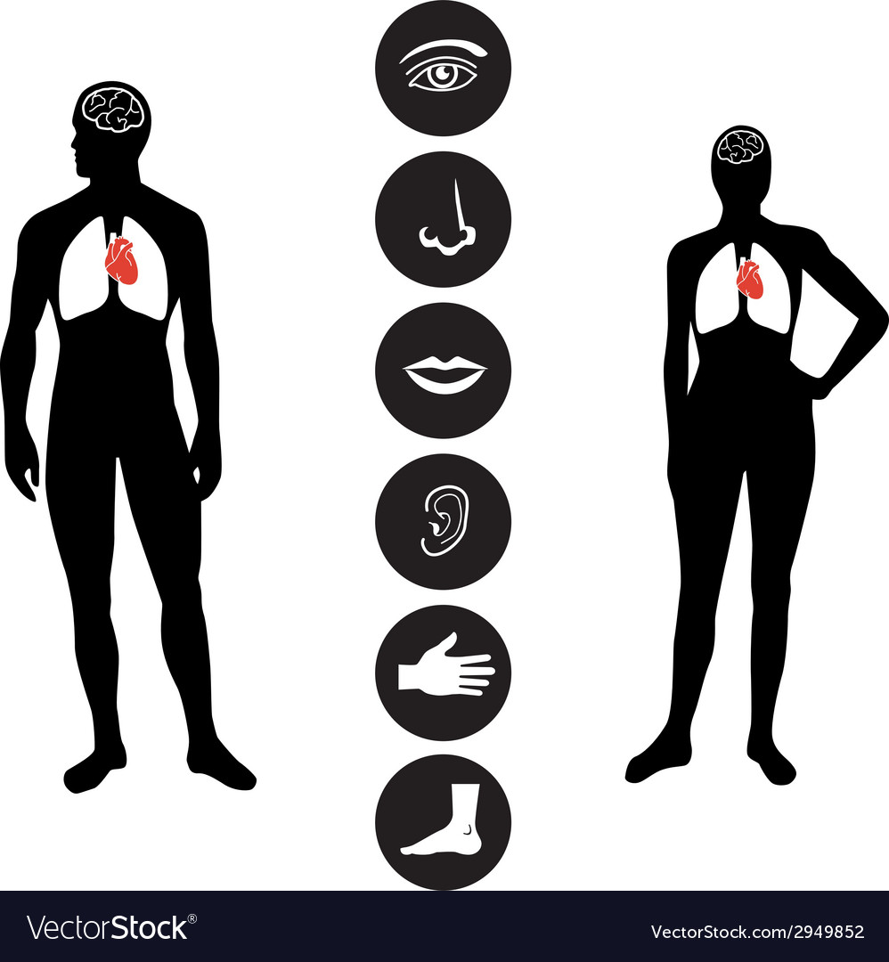 Medical Human body part icon vector image
