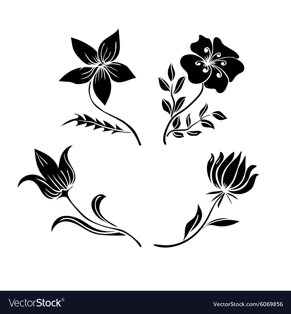 Flower tulip vector image
