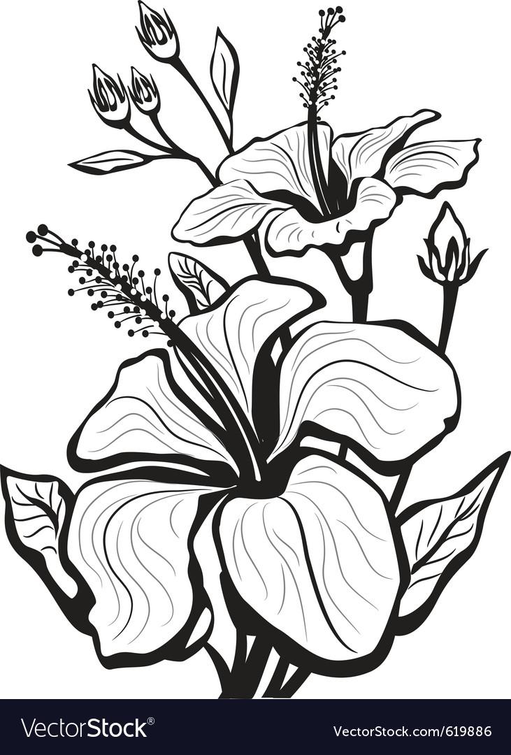 Sketch Of Hibiscus Flowers Royalty Free Vector Image