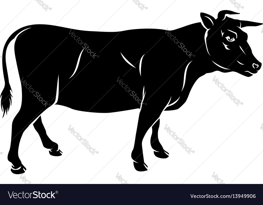 Cow or bull beef vector image