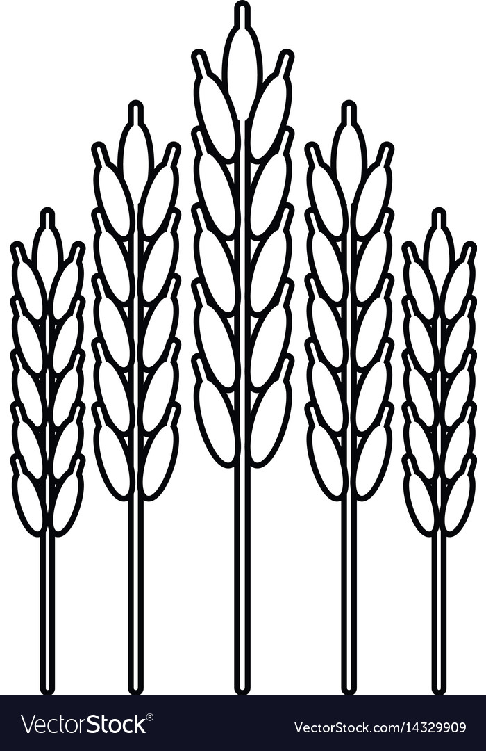 Harvesting wheat ears thin line vector image