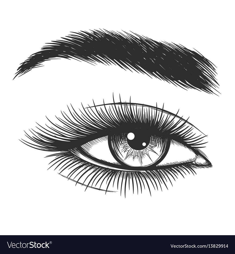 Beautiful lady eye sketch vector image
