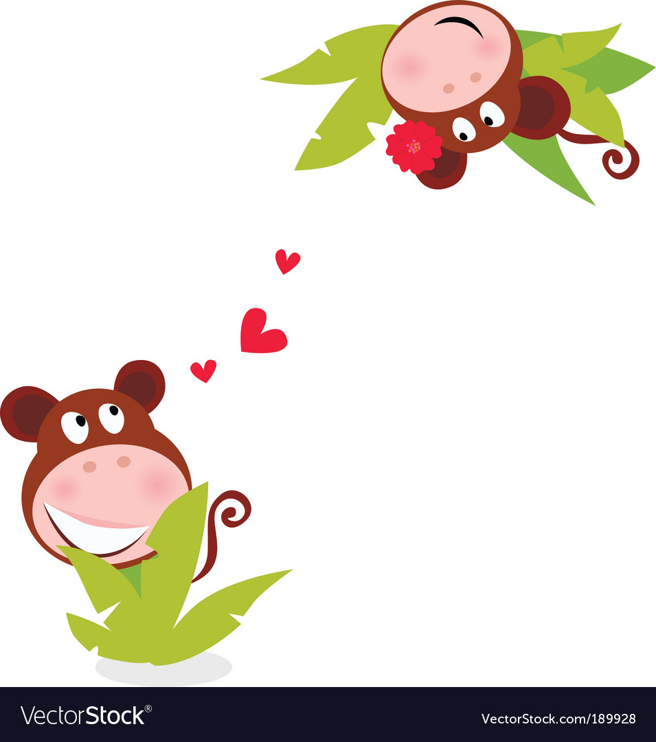 Monkey male female vector image