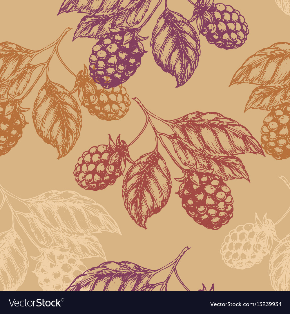 Raspberry blackberry seamless pettern vector image