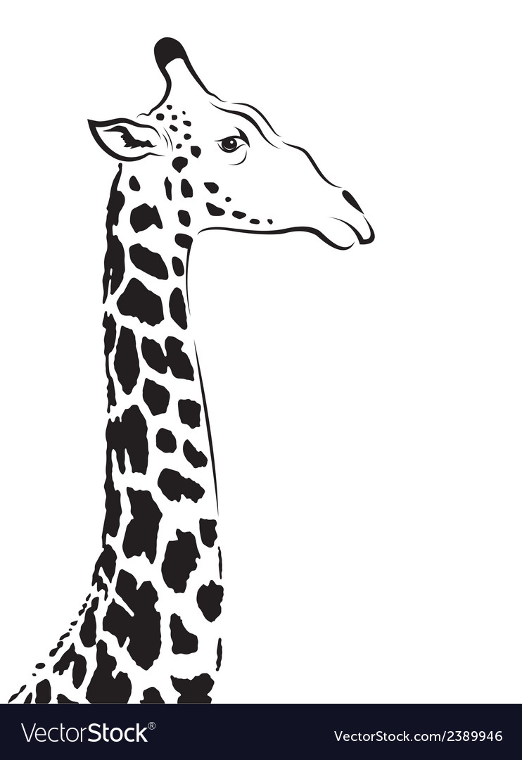 Image of an giraffe head vector image