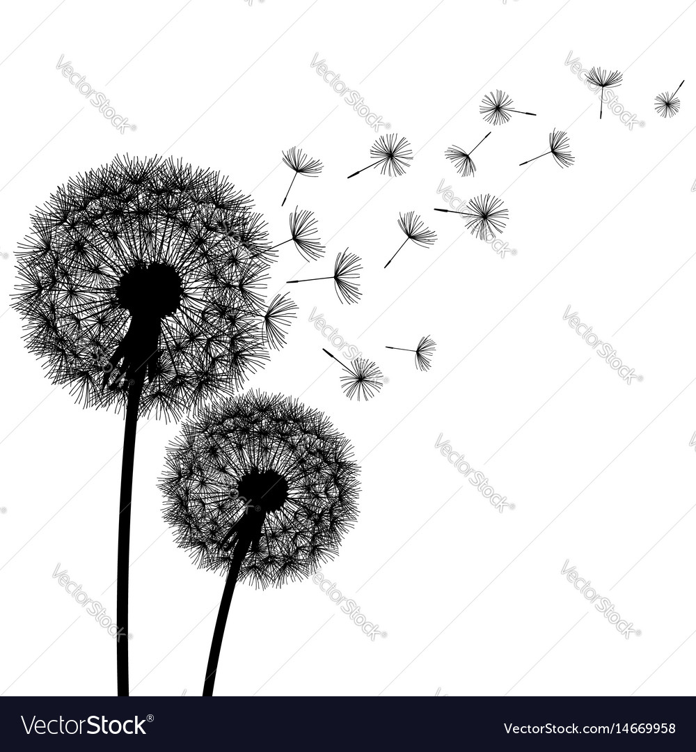 Nature background with dandelion silhouette vector image