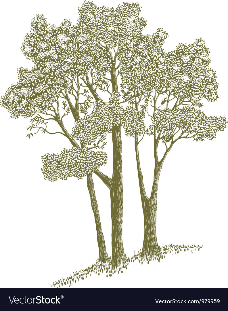 Woodcut Trees Vector Image