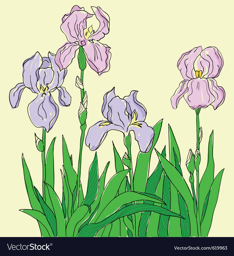 Color iris hand drawing vector image