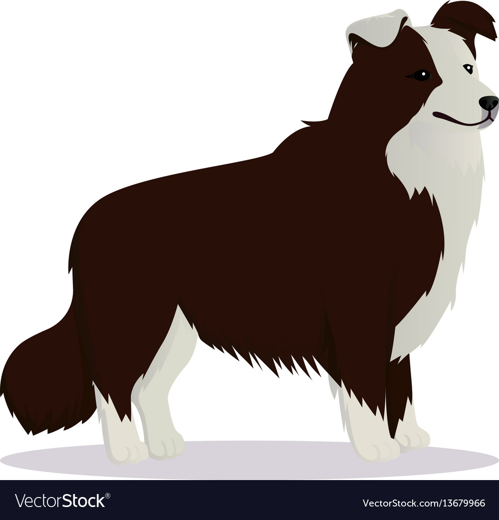 Border collie dog brown vector image