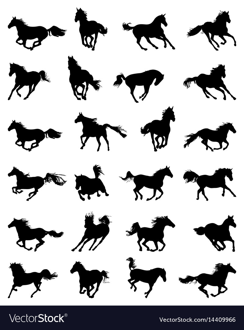Silhouettes of galloping horses vector image