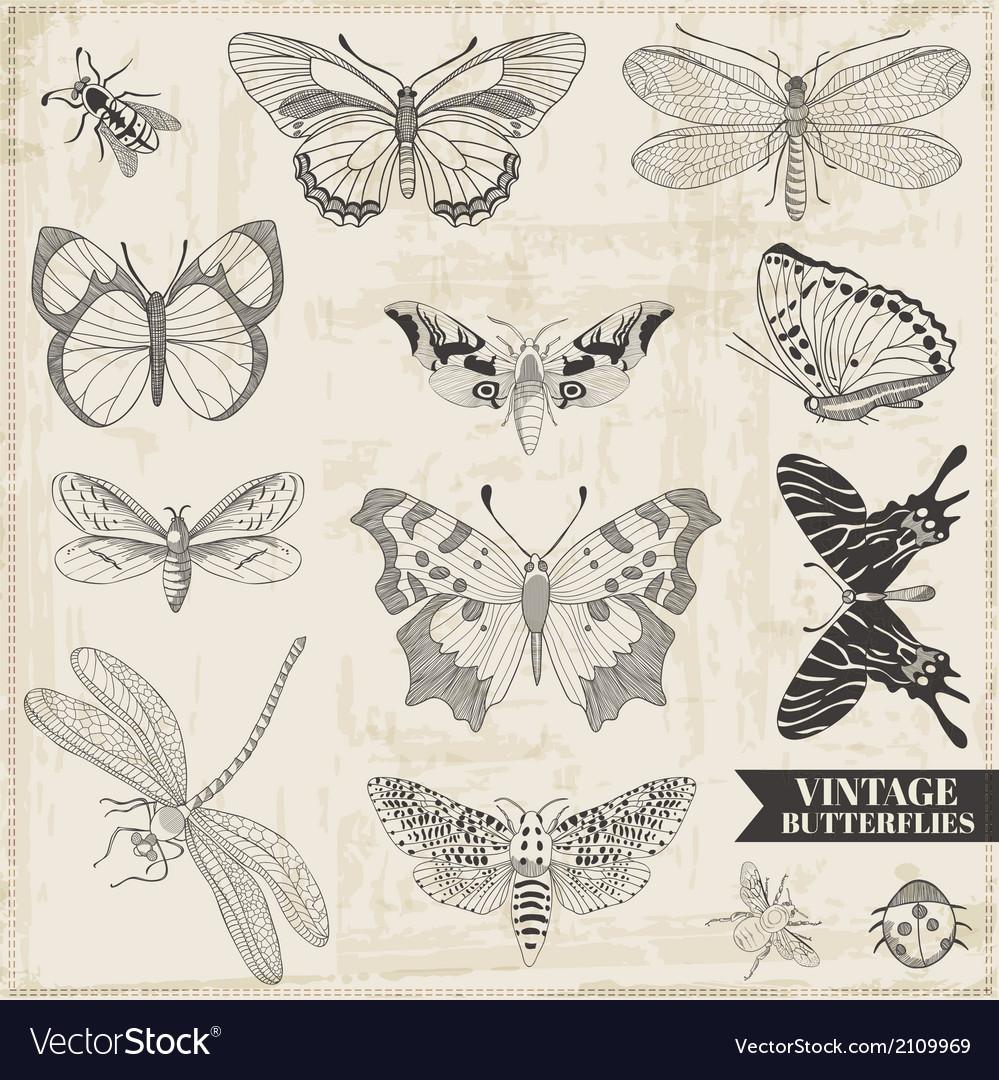Set Calligraphic Hand drawn Butterflies vector image
