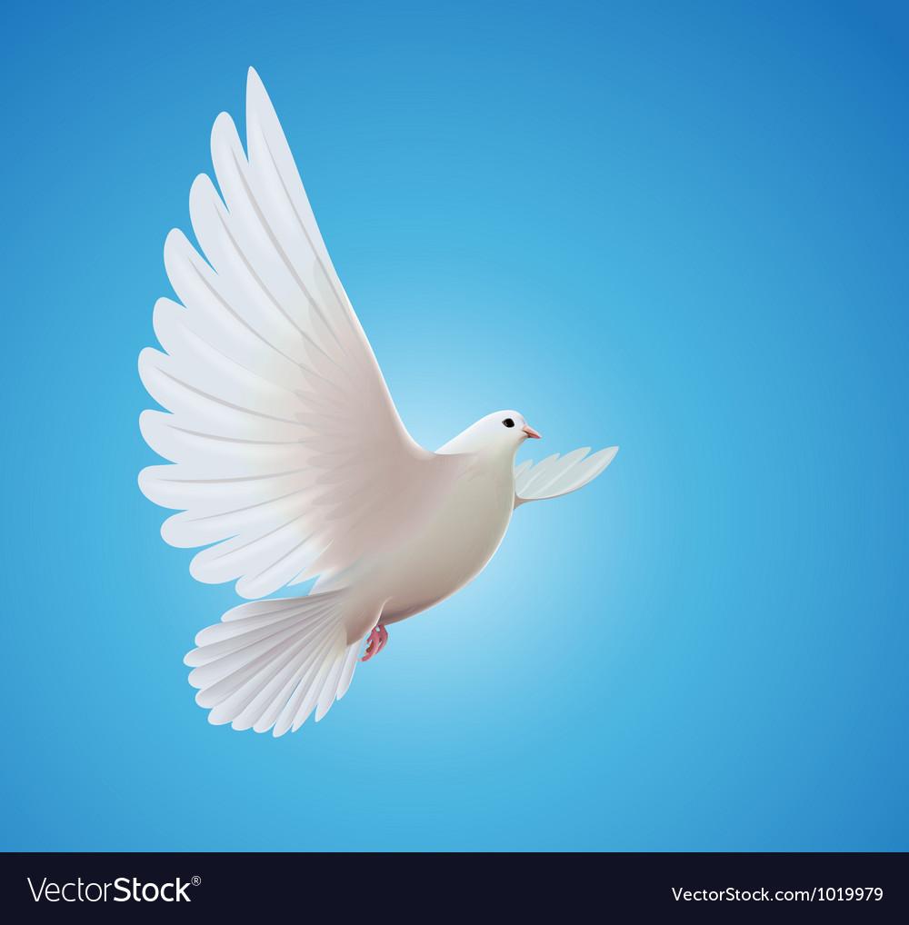 White dove vector image