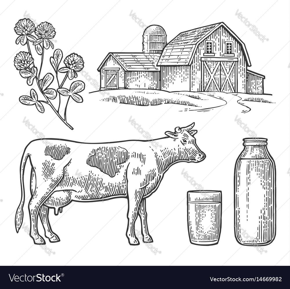 Set milk farm cow head clover glass and bottle vector image