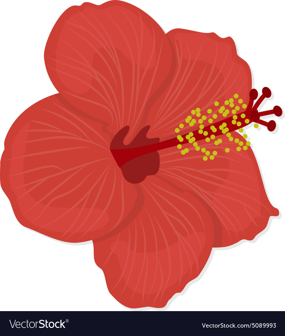 Hawaiian hibiscus flower royalty free vector image hawaiian hibiscus flower vector image izmirmasajfo Gallery