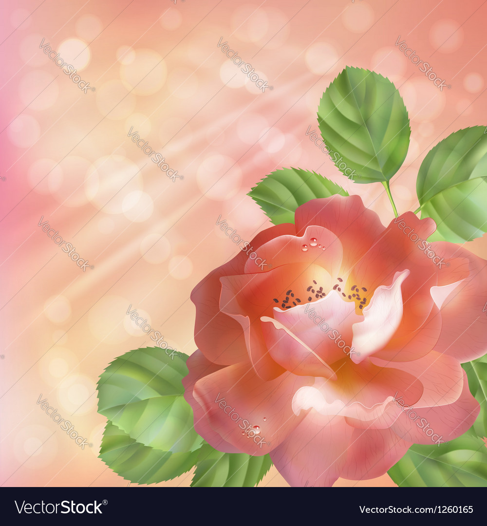 Floral background with rose sun and blur vector