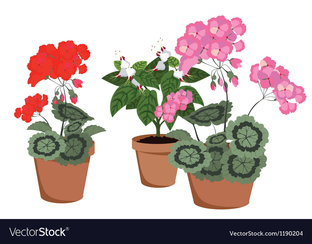 Flowering houseplants vector