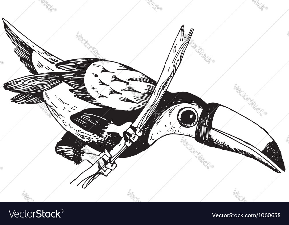 Keelbilled toucan vector