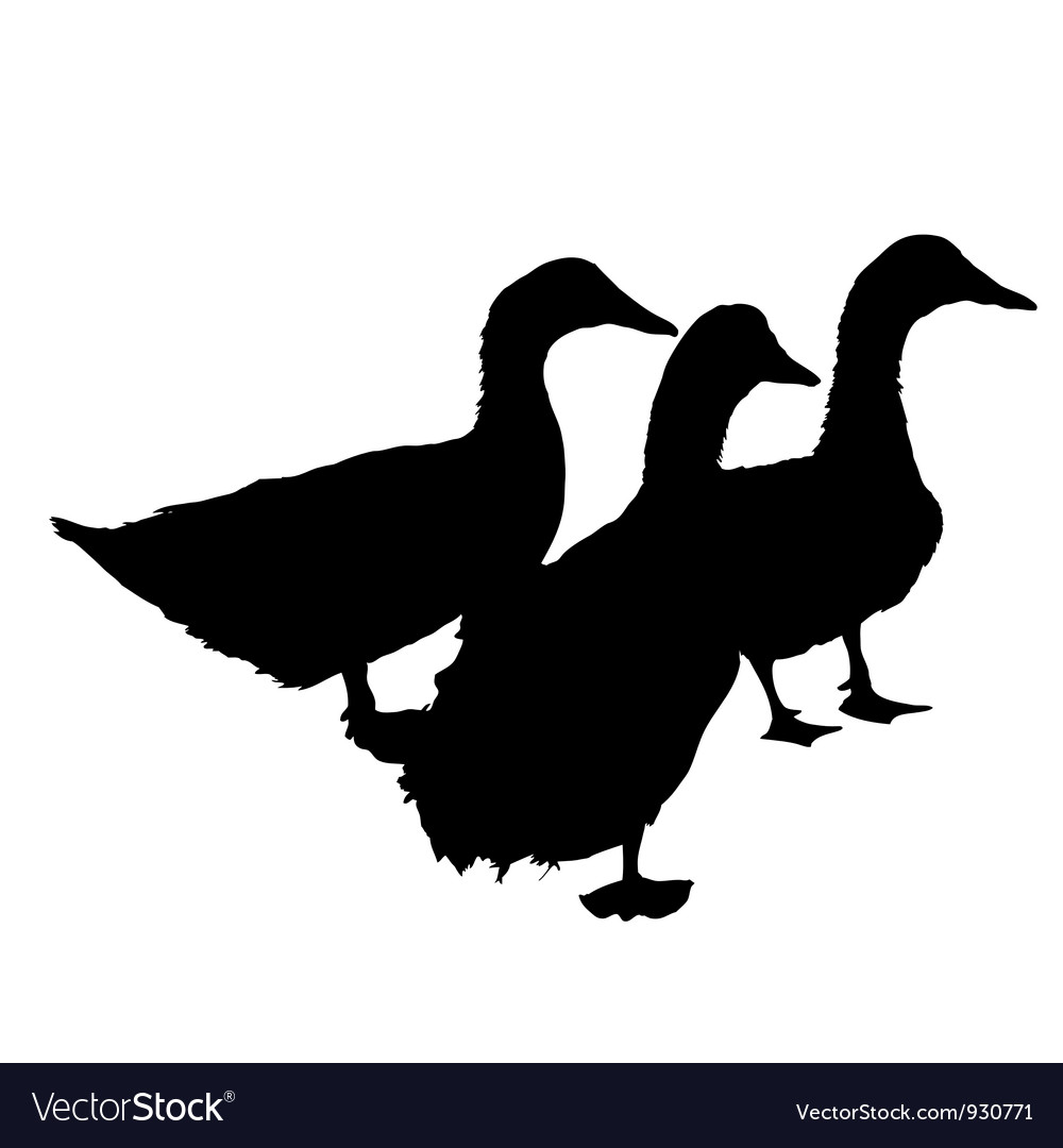 Three silhouette of beautiful ducks vector