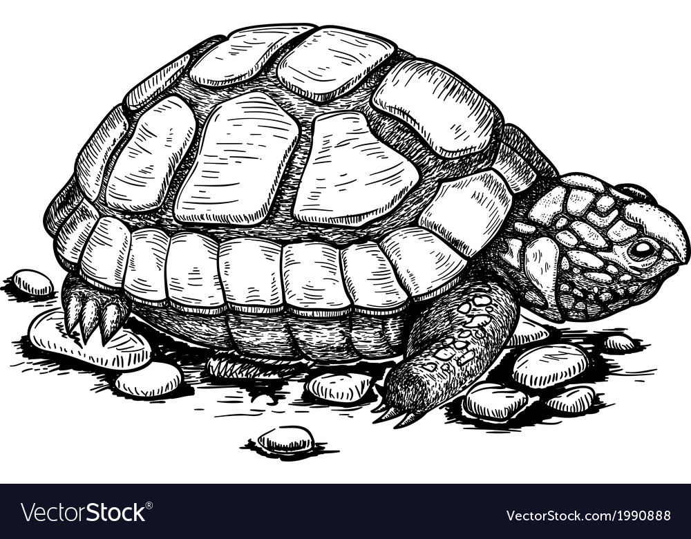 Engraving turtle vector