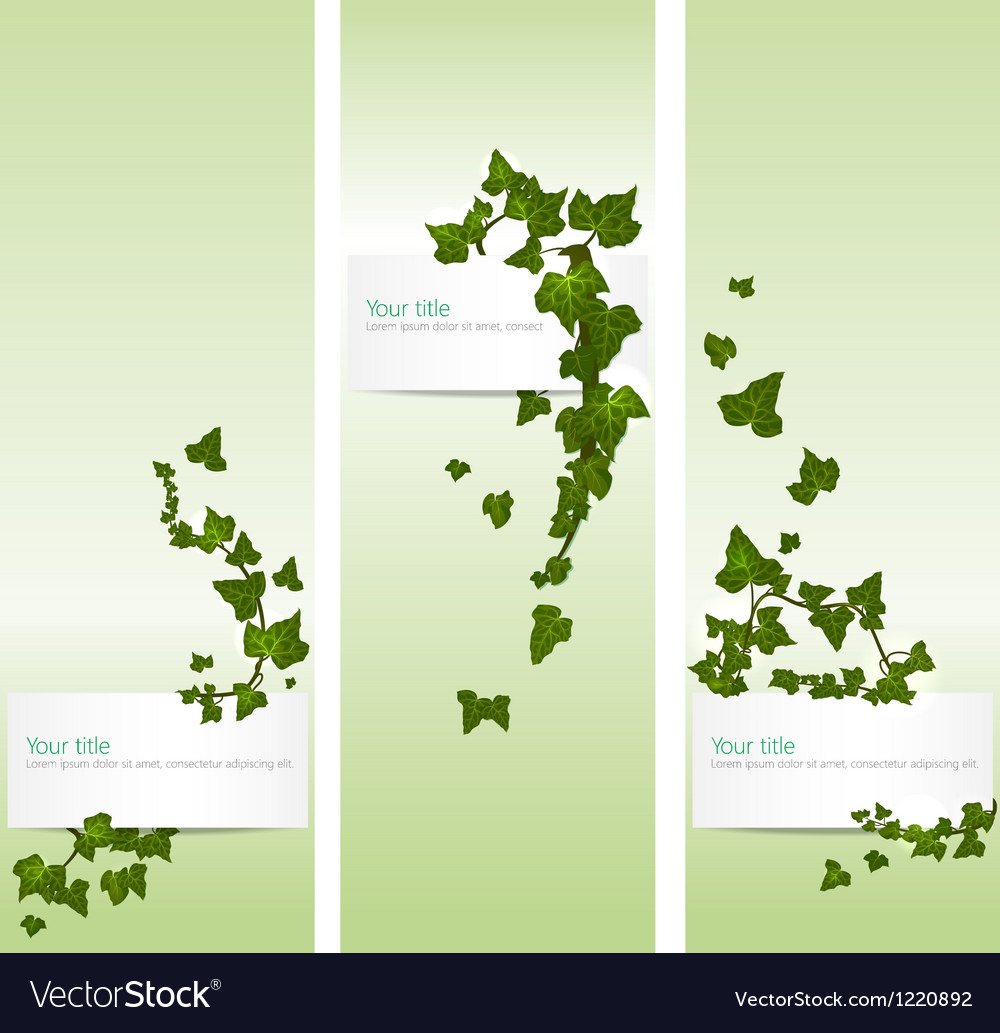 Spring banners with ivy vector