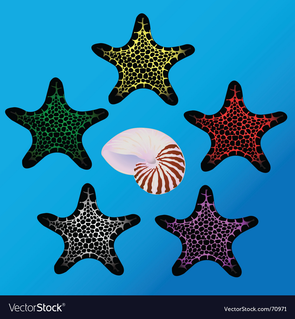 Starfish and sea shell vector