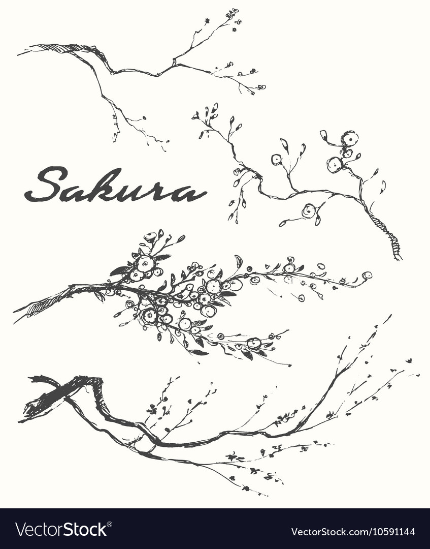 Sketch branch sakura flowers vector