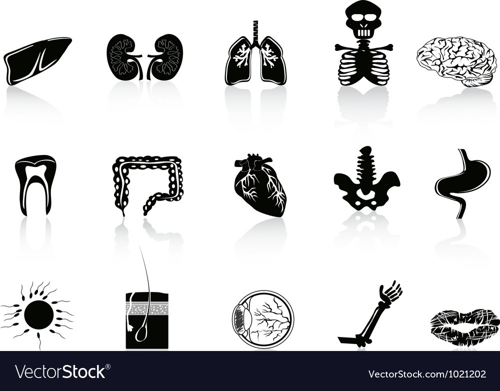 Black human anatomy icon vector