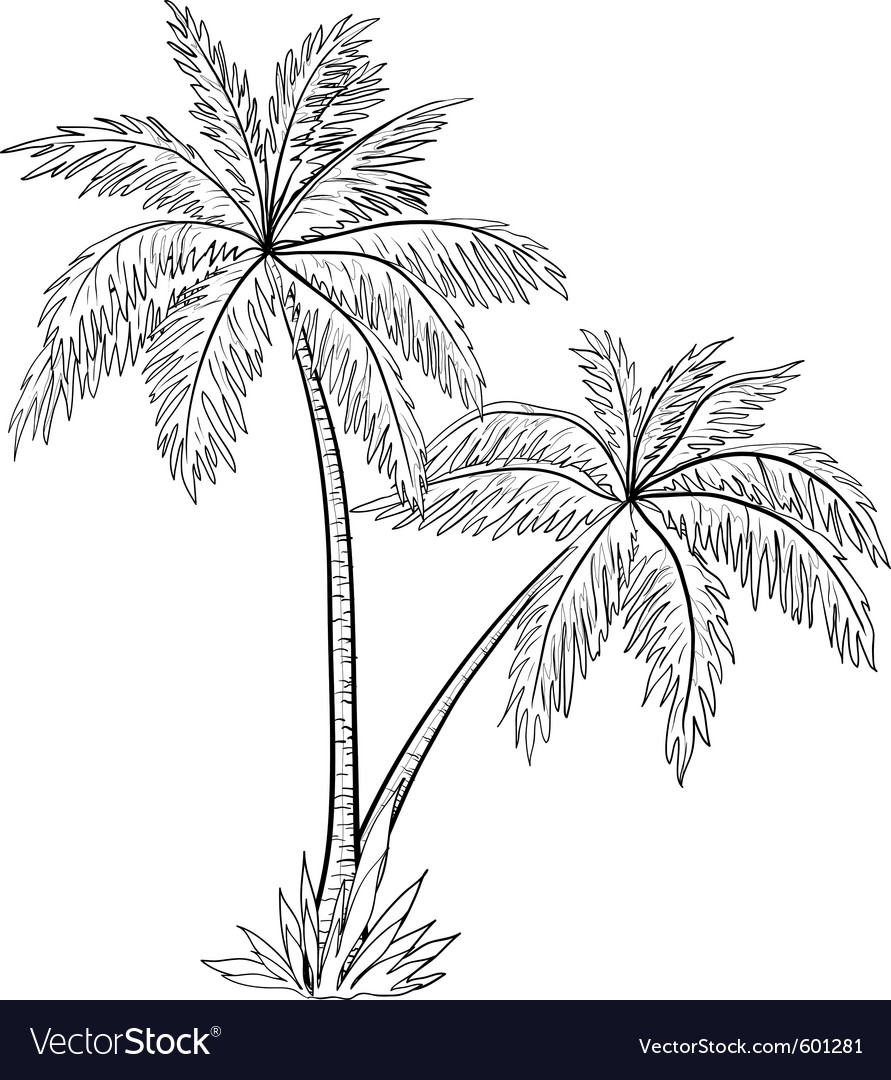Palm Trees Outline besides 21459345 likewise Blue Mussel Drawing furthermore Fingerprinttreegenerator in addition Bushes. on tree top view