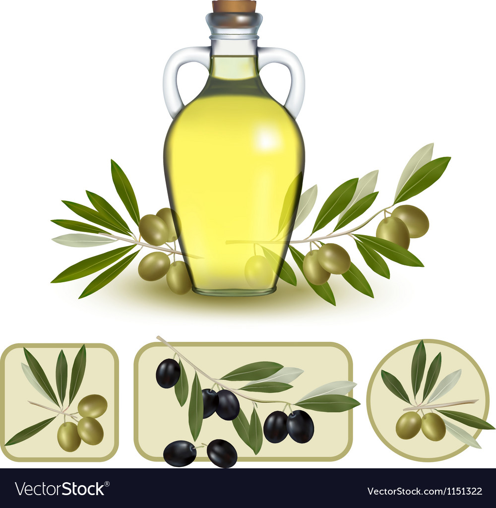 Bottle of oil with green olives and olive oil vector