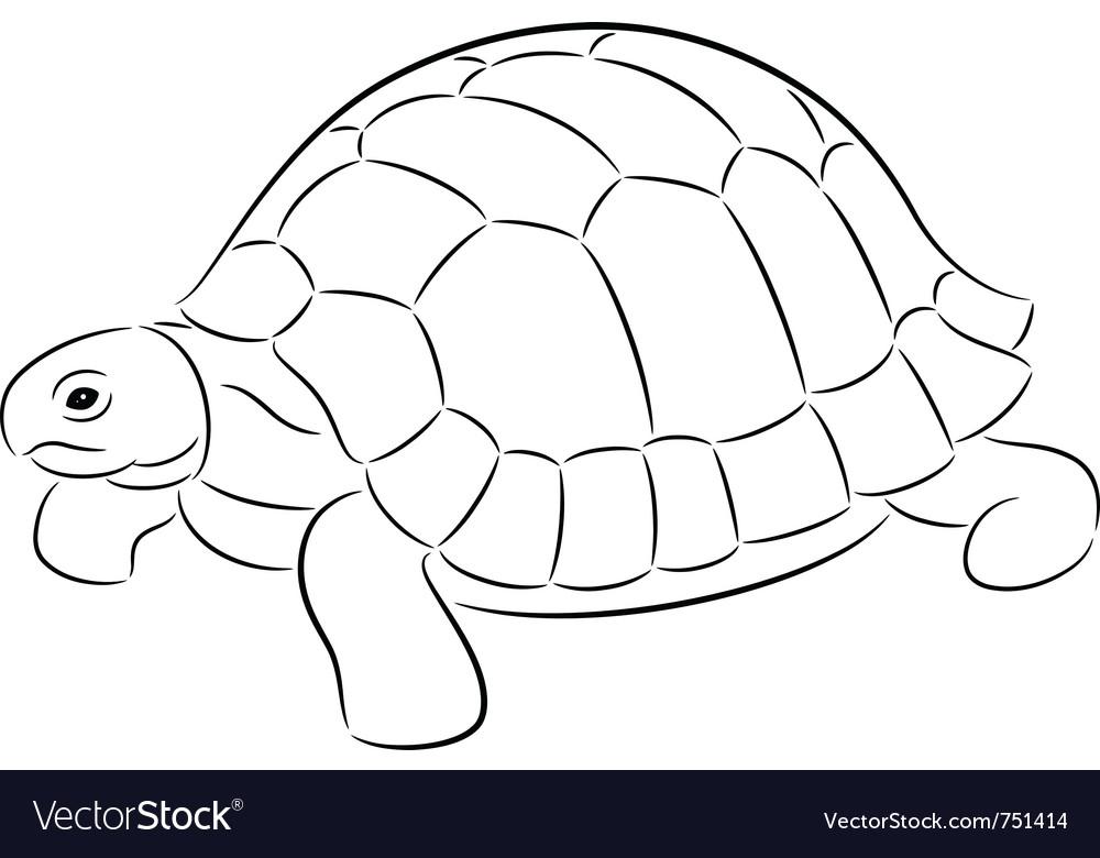 Tortoise vector by Talli - Image #751414 - VectorStock
