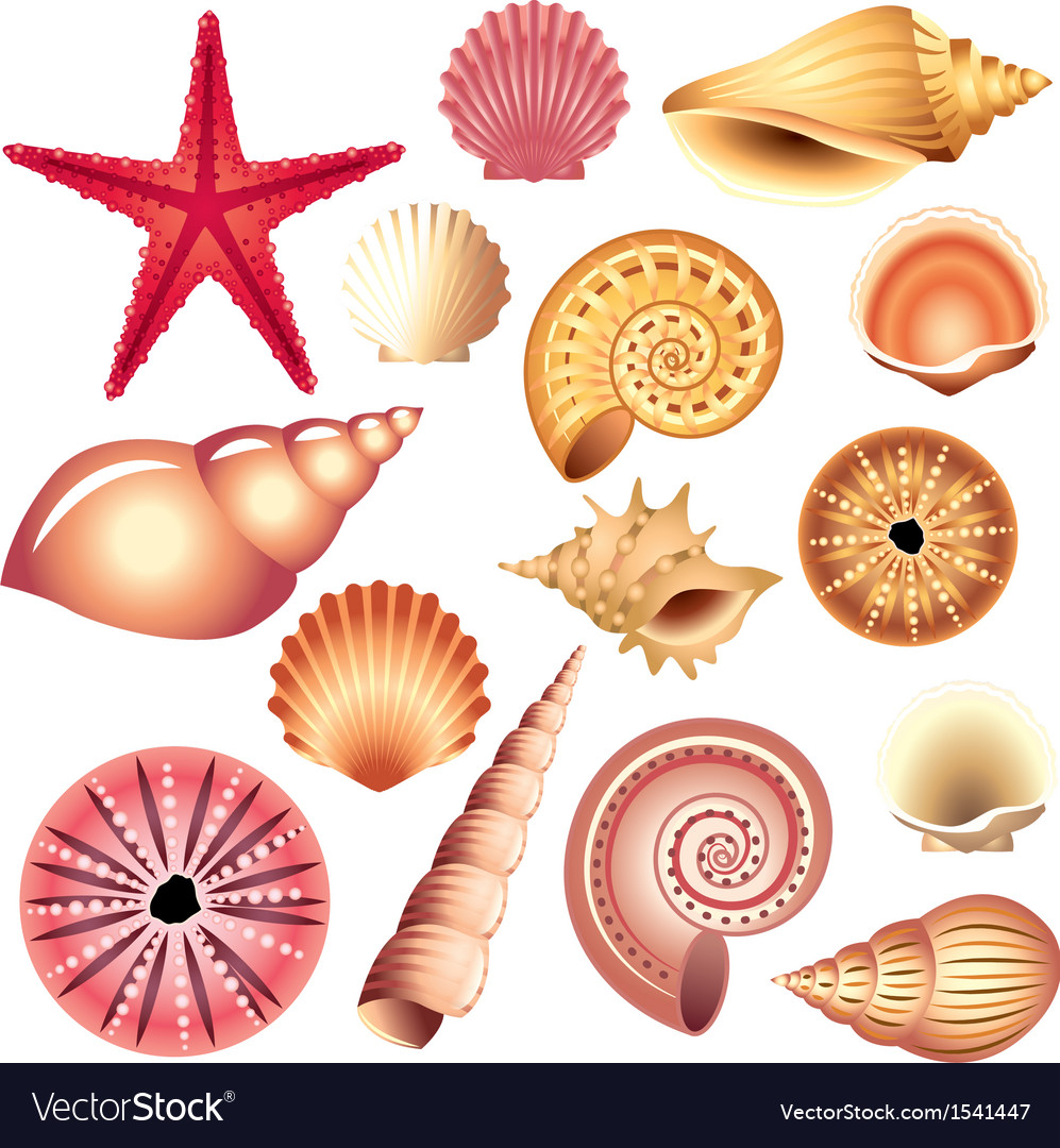 Shells set vector