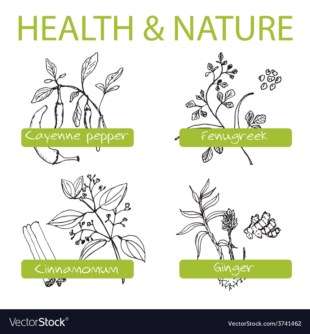 Handdrawn set health and nature collection of