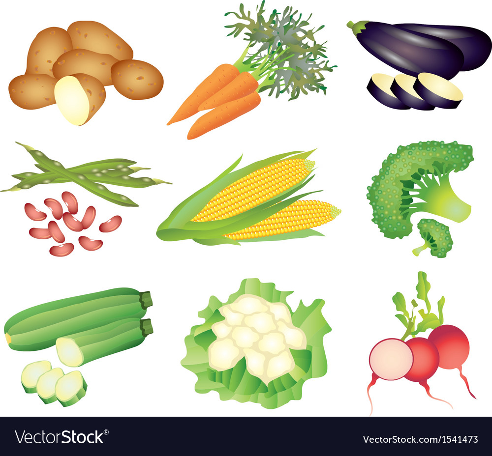 Vegetables popular set vector