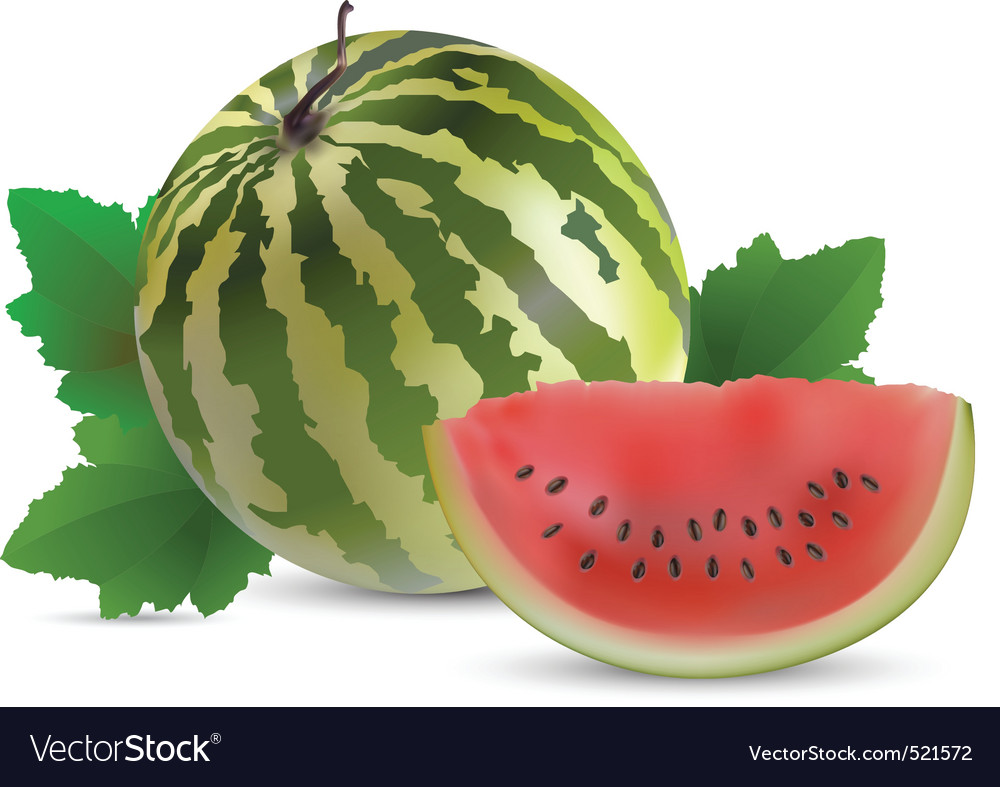 Watermelon with slices vector