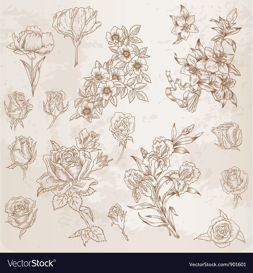 Detailed hand drawn flowers vector
