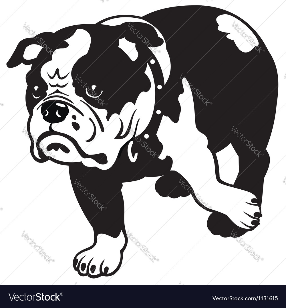 English bulldog black and white vector