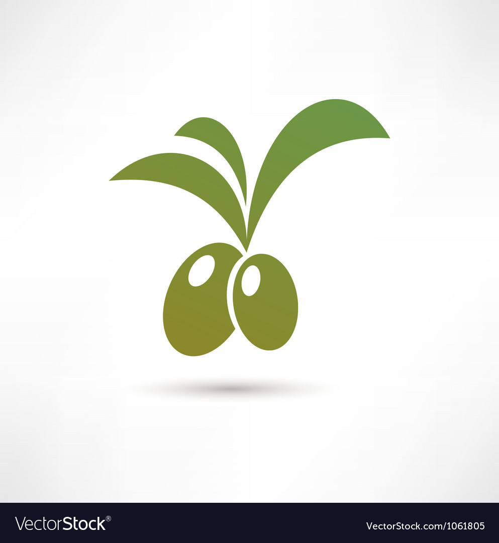 Olive icon vector